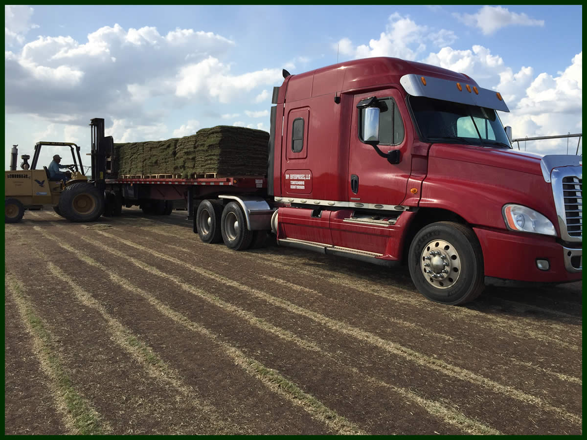 Grass Sod Delivery Texas