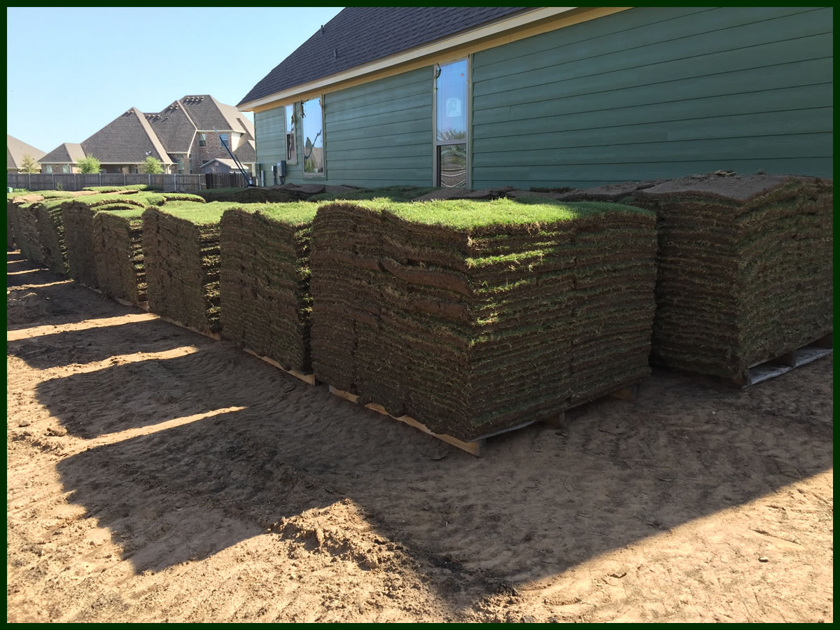Grass Sod for Sale Texas